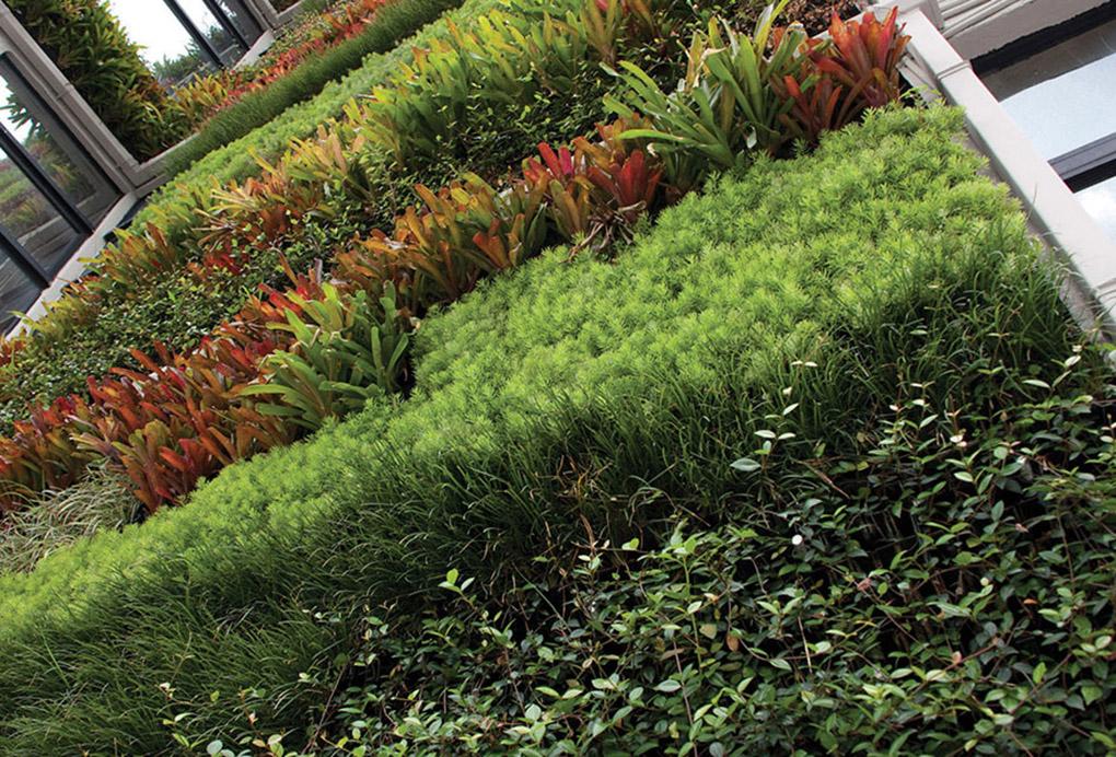 Jardines verticales en santo domingo for Jardines verticales construccion